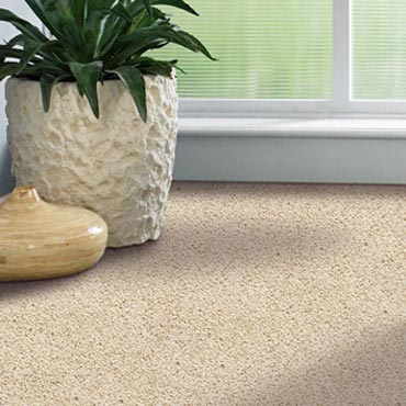 Shaw Carpet Bellera Collection | Hamlin, PA